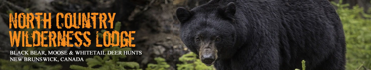 North Country Wilderness Lodge - Canadian Black Bear, Moose, and Whitetail Deer Guided Hunts
